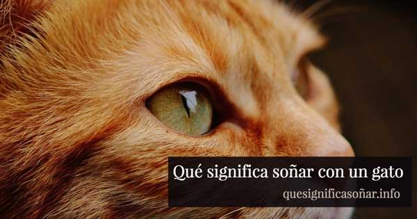 que significa soñar con un gato