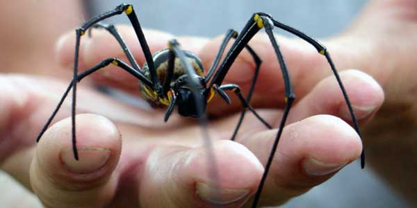 que significa soñar con una araña negra