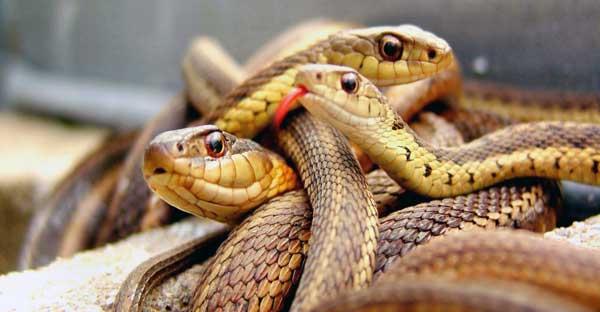 soñar que te muerde una serpiente